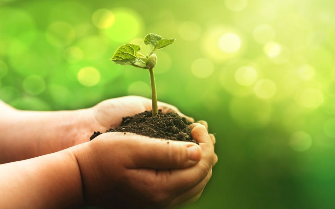 How to Build a More Eco-Friendly Business